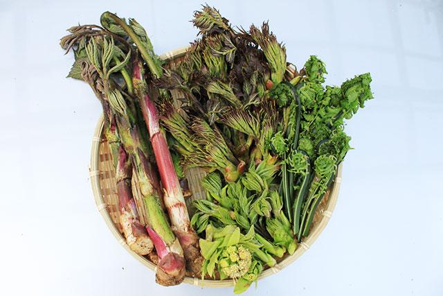 季節の山菜