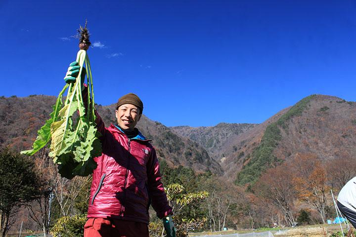稲核菜収穫